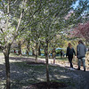 Japanese garden outside Buffalo History Museum near Buffalo State College.