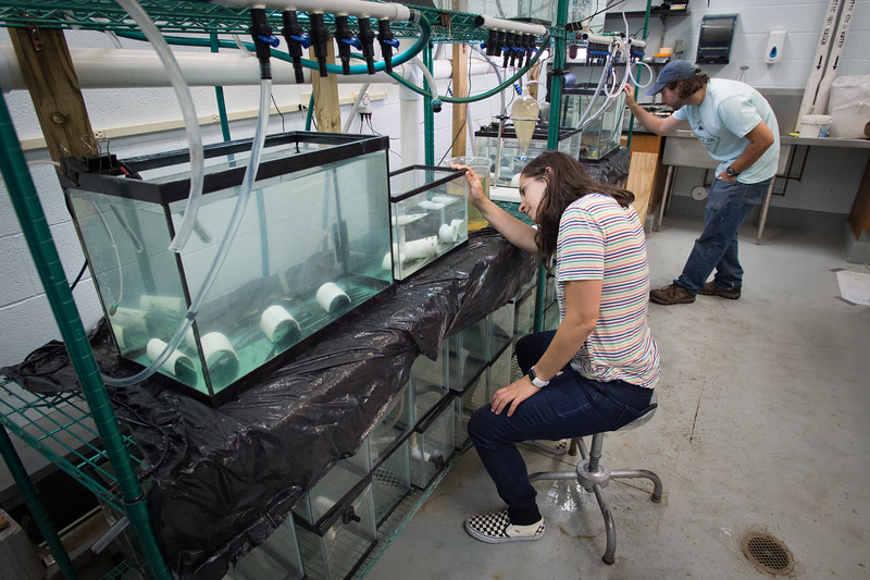 Graduate students working in Great Lakes Center labs at Buffalo State College.
