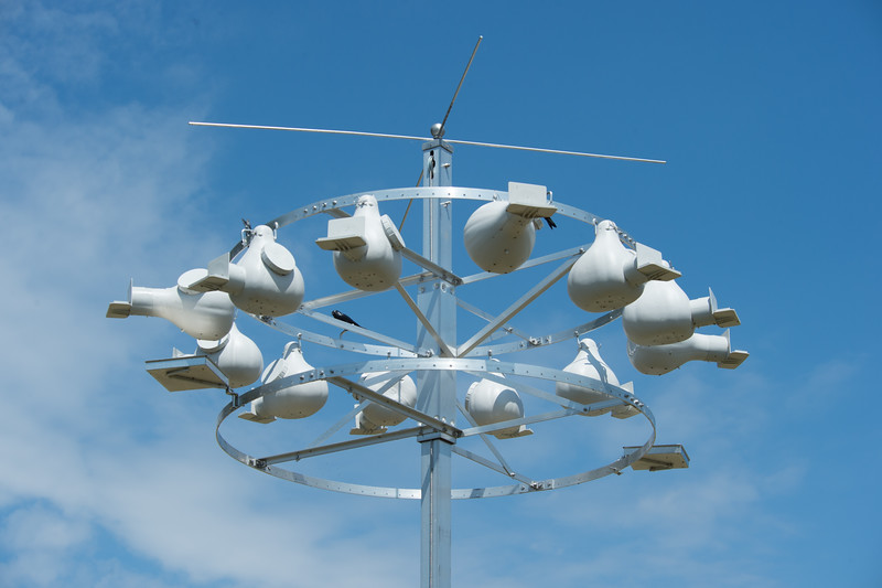 Purple Martin houses at the Great Lakes Center at Buffalo State College.