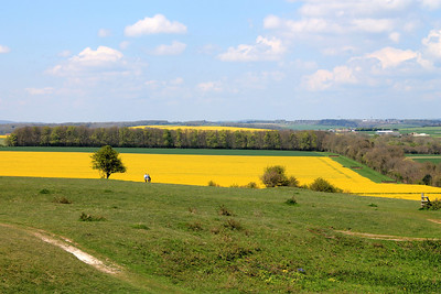 View from Badbury Rings