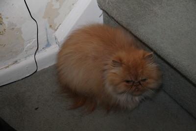 corner cat Andokai