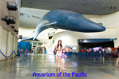 Aquarium of the Pacific: September 5, 2011