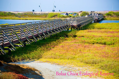 Bolsa Chica Ecological Reserve: September 13, 2011