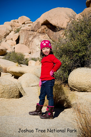 Joshua Tree National Park: November 22, 2011