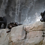These chimpanzees are having too much fun. :)