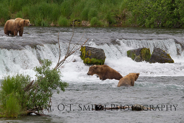 There seems to be two schools of thought in bear fishing.  One, stand in the pool where the fish gather strength to jump, Two, stand above the falls and try to catch a fish in midair when they jump.