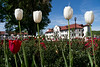 2011, campus, spring, collegehall, tulips, flag, flowers, bell tower