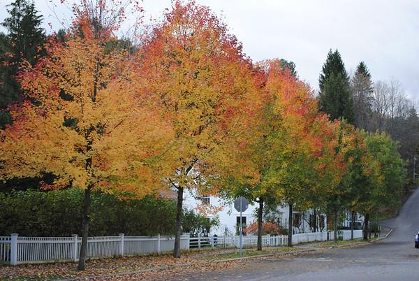 Beauty After The Flood - Foliage