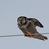 back up on the wire without supper....but it kept trying much to our delight