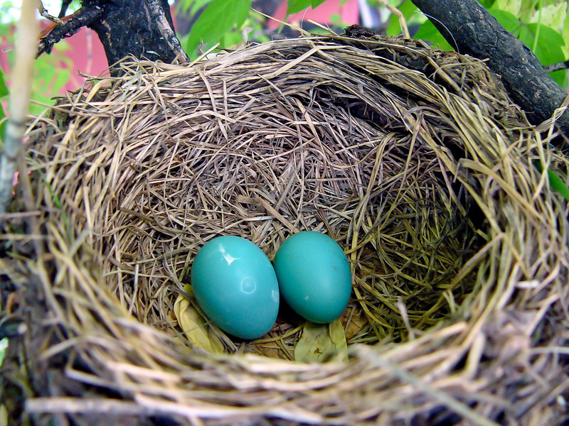 This was the start of this great documentary of a new Robin family
