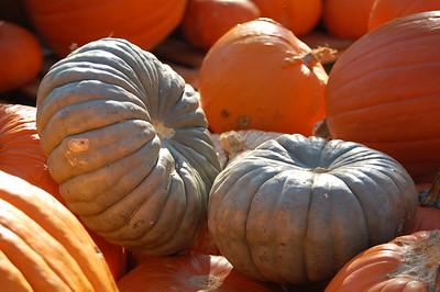 2011-10-20 PreK4 Pumpkin Patch