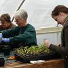 Greenhouse 2011