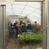 Greenhouse 2011, through the window