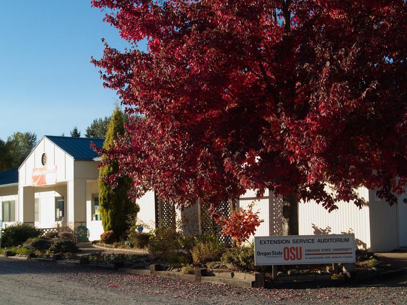 Red Maple at SOREC
