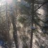 "St. Croix National Scenic Riverway: Kolton - ""Snowy Pines"""