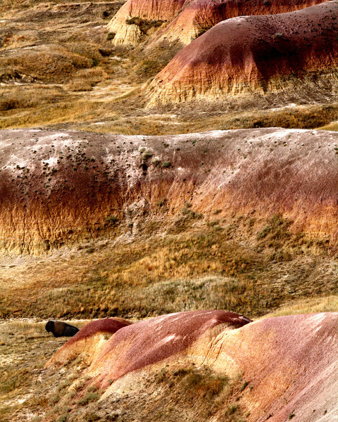 "Badlands National Park: Diamonte, 16 - ""Bright Colors"""