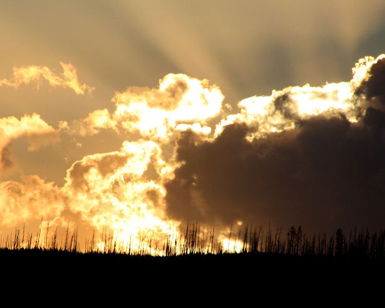"""Yellowstone National Park: Willie, 13 - """"Fire over Fire"""""""
