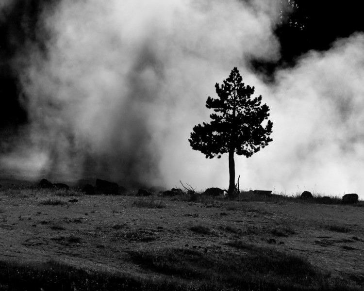 """Yellowstone National Park: Jessie, 16 - """"The Smoke and the Tree"""""""
