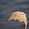 """St. Croix National Scenic Riverway: Ronnie, 16 - """"Soft Wind"""""""