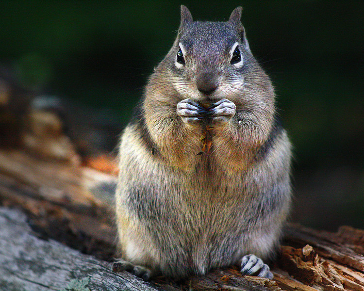 """Rocky Mountain National Park: Jourdyn, 17 - """"What you Lookin' At?"""""""