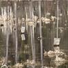 Submerged Fence