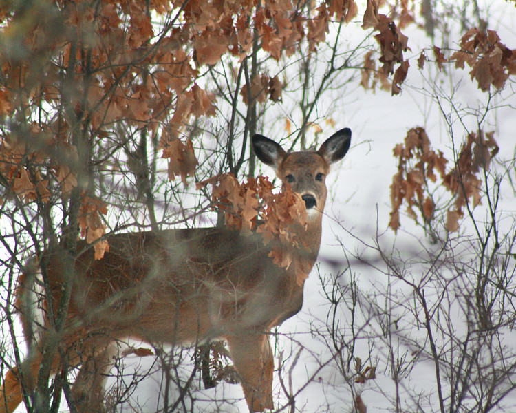 """St. Croix National Scenic Riverway: Bobby, 14 - """"Dear Deer"""""""