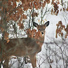 "St. Croix National Scenic Riverway: Bobby, 14 - ""Dear Deer"""