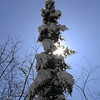 "St. Croix National Scenic Riverway: Cole, 16 - ""Winter Sentinel"""