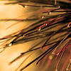 "St. Croix National Scenic Riverway: Alex, 17 - ""Pine Needles"""