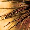 "St. Croix National Scenic Riverway: Alex, 17 - ""Pine Needles"""