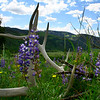 """Yellowstone National Park: Chris, 17 - """"Final Resting Place"""""""