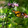 "St. Croix National Scenic Riverway: Wali, 16 - ""Butterfly"""