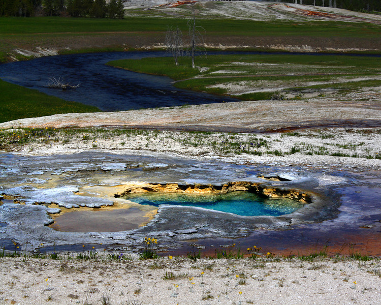 """Yellowstone National Park: Willie, 13 - """"Hot Springs"""""""