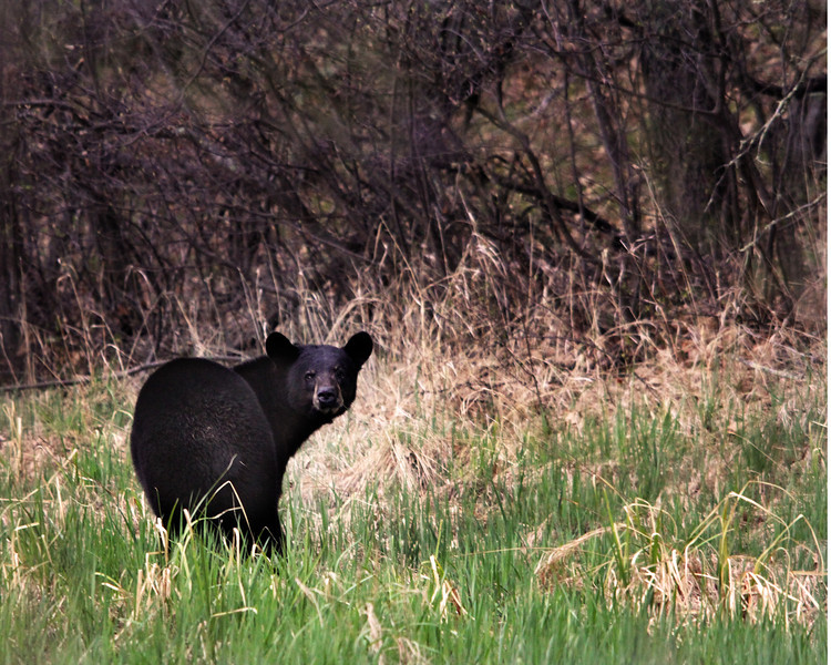 """St. Croix National Scenic Riverway: Alex, 17 - """"Looking at Me"""""""