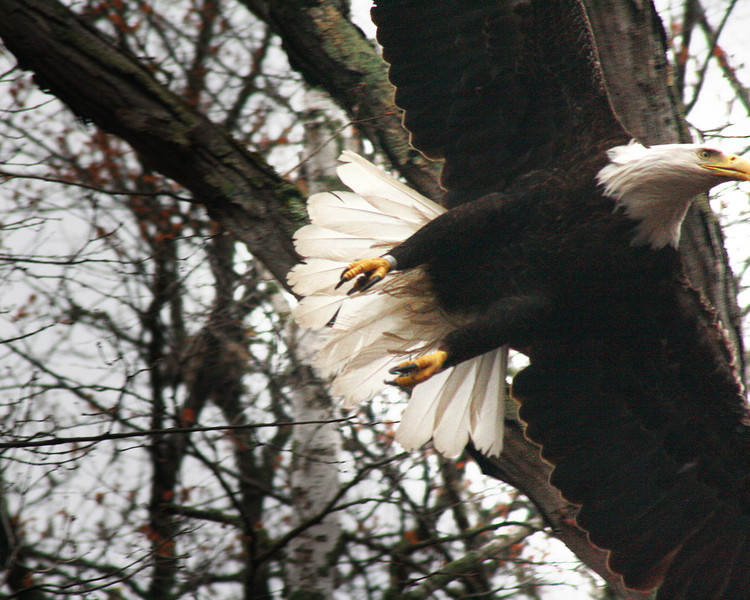 """St. Croix National Scenic Riverway: Bobby, 17 - """"Lift Off!"""""""