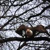 """St. Croix National Scenic Riverway: Bobby, 14 - """"Eagle Taking Flight"""""""