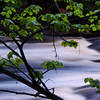 "Isle Royale National Park: Kyle, 17 - ""Stream through the Trees"""