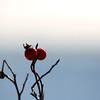 "St. Croix National Scenic Riverway: Ronnie, 16 - ""Winter Berries"""