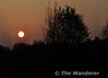 The setting sun seen in Derryounce Bog, north of Portarlington. Tues 19.04.11