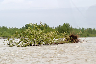 Tree Flowing Down River