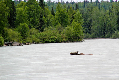 Moose Crossing River