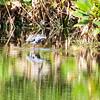 Wakodahatchee Wetlands - 10/8/15