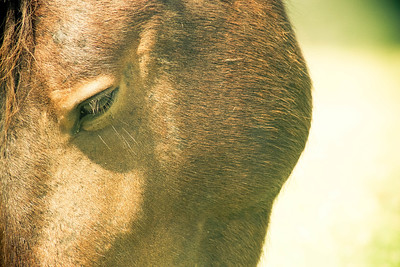 Eyes; Assateague 2011