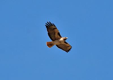 02-05-11 Ft Hunter-Ligget to Big Sur-Monterey