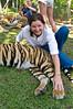 Tigers at Tiger Kingdom
