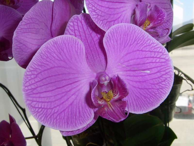 Orchid at reception