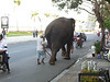 Elephant walking through the main street of Phnom Penh