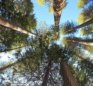 View from my hammock in North Pines Campground.