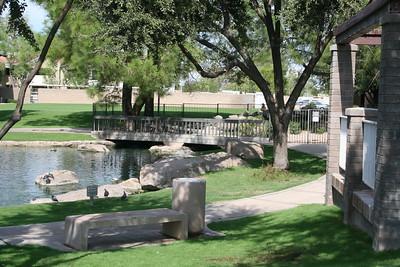 10-25-2011 Ducks at Park