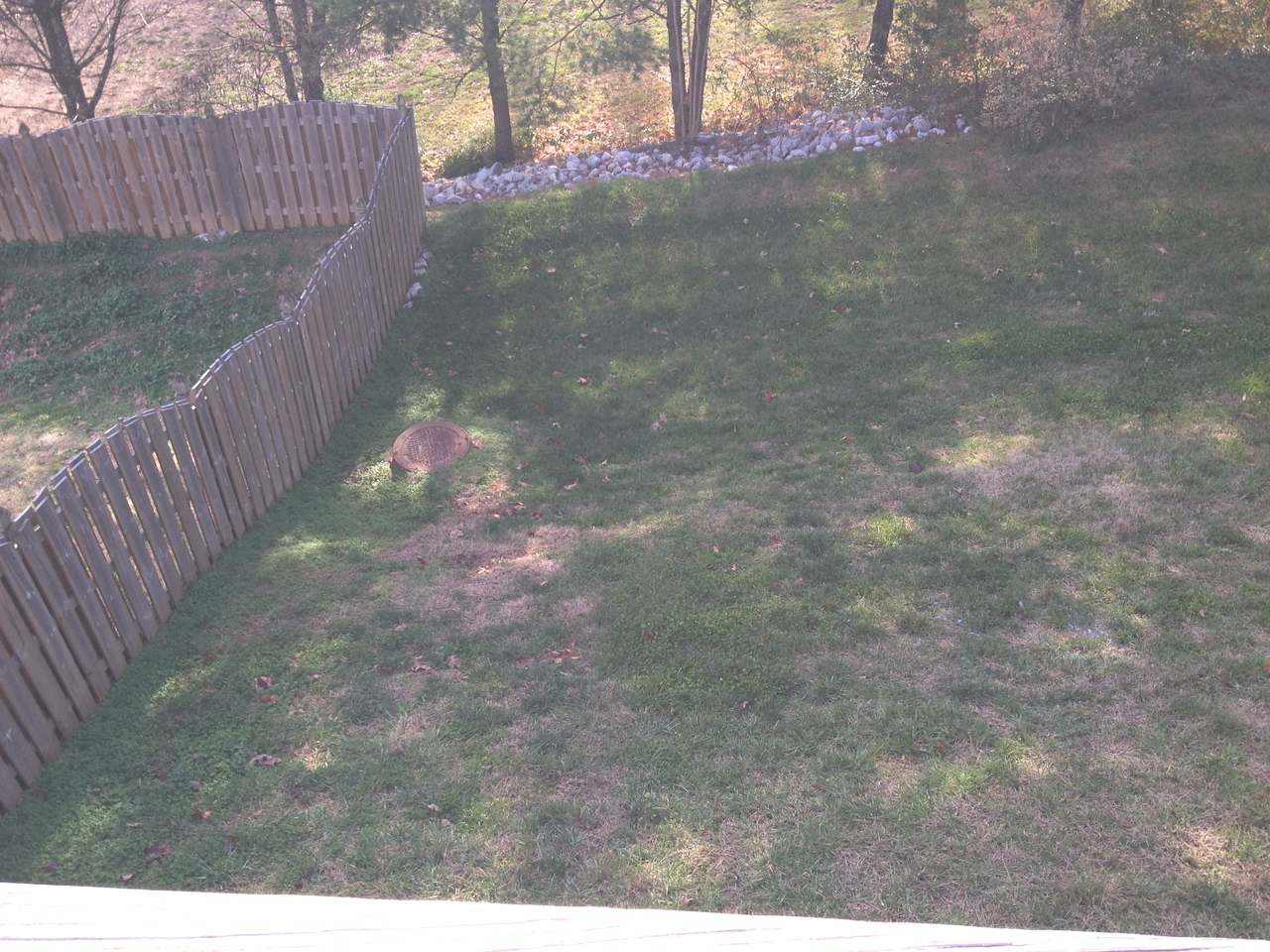 Backyard is also sloped but not so drastically